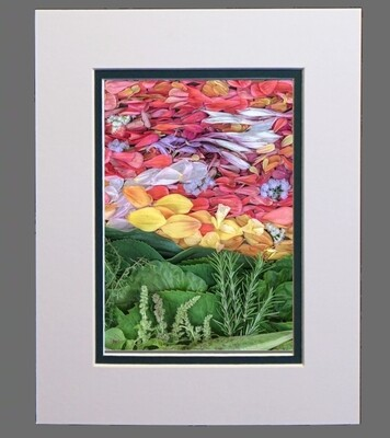 Petal Pointillism #5 - 8