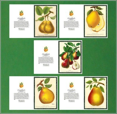 City of Flowers Greeting Cards: Pears Set # 1