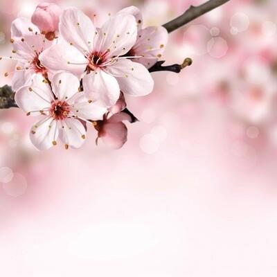 Spring Pink Flower