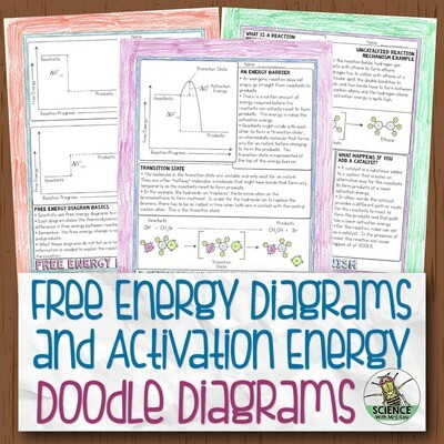 Free Energy Diagrams and Activation Energy Doodle Diagram Notes
