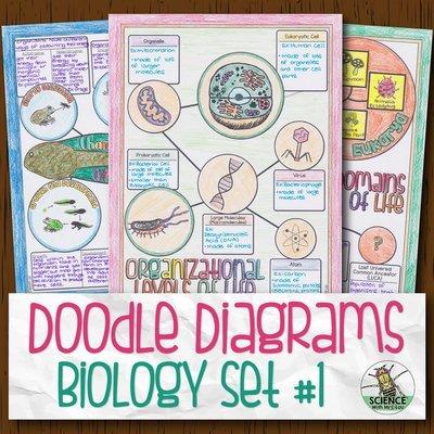 Biology Doodle Diagrams Bundle