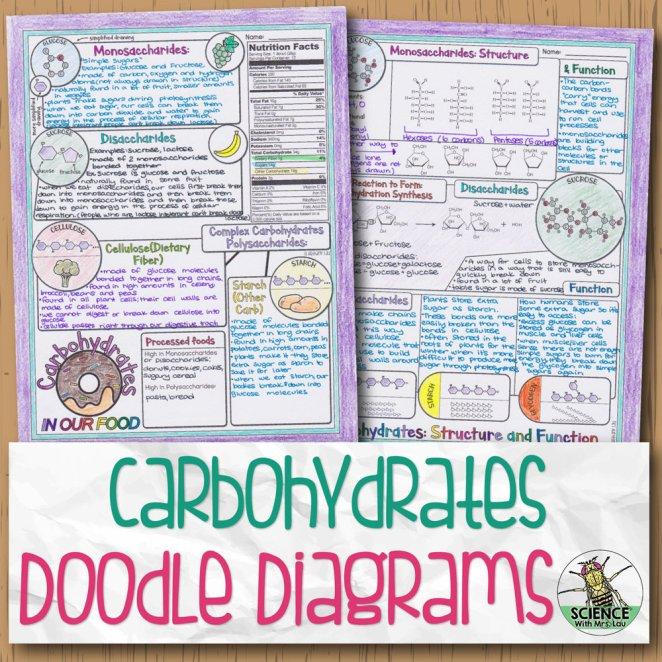 Carbohydrates Doodle Diagram Notes