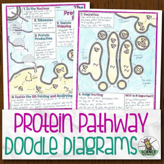 Protein Pathway Doodle Diagrams