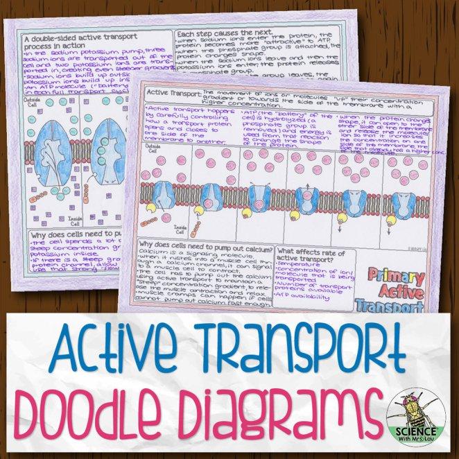 Active Transport Doodle Diagrams