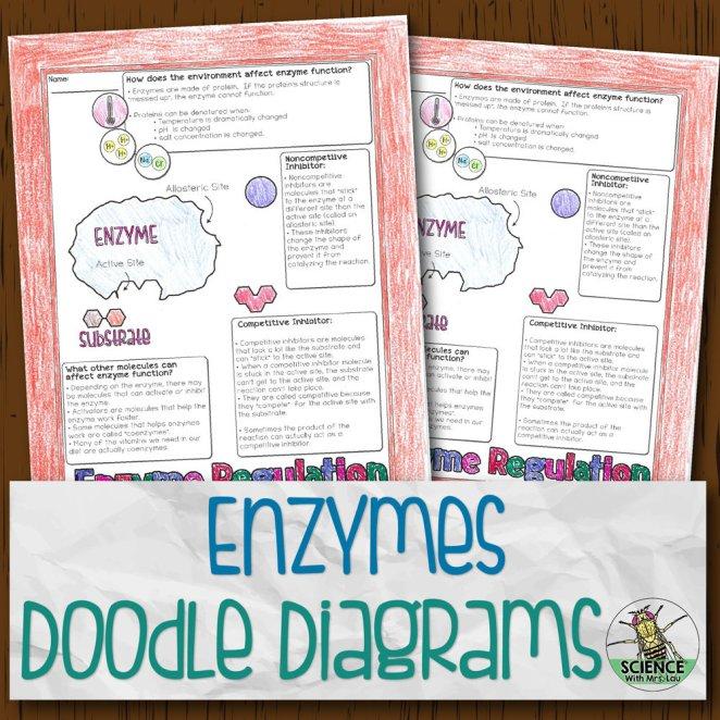 Enzymes Doodle Diagrams