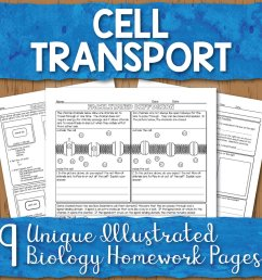 Cell Transport Homework Pages   Store - Science and Math with Mrs. Lau [ 1000 x 1000 Pixel ]