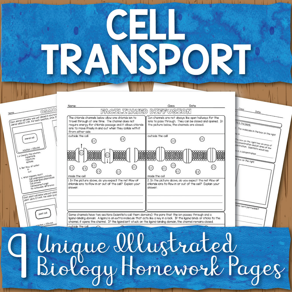 hight resolution of Cell Transport Homework Pages   Store - Science and Math with Mrs. Lau