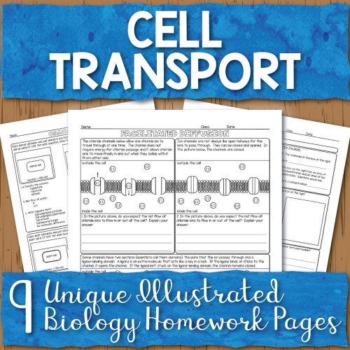 small resolution of Cell Transport Homework Pages   Store - Science and Math with Mrs. Lau