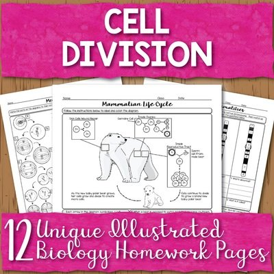 Cell Division Homework Pages