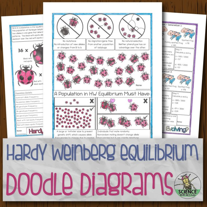 Hardy Weinberg Equilibrium Doodle Diagrams