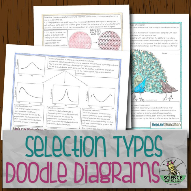 Selection Types Doodle Diagrams