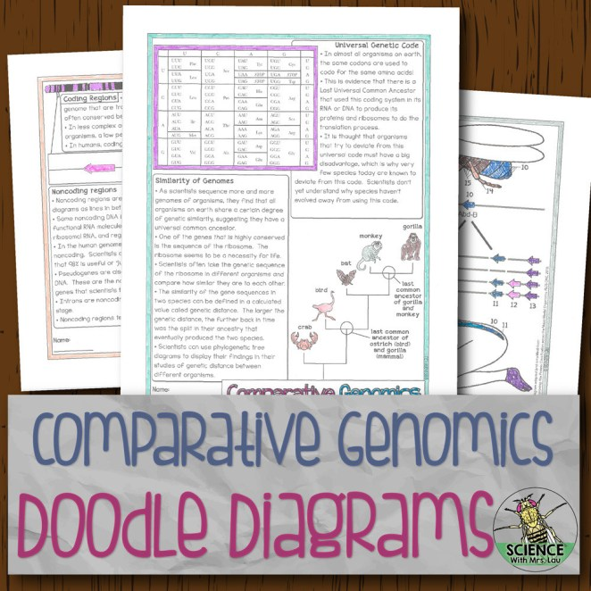 Comparative Genomics Doodle Diagrams