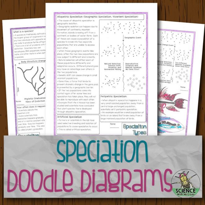 Speciation Doodle Diagrams