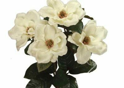 SB0302CRM - Magnolia Bush x6