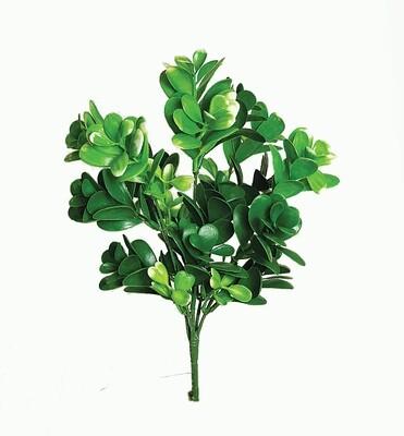 SBG6100GN - Succulent leaf bush x 5