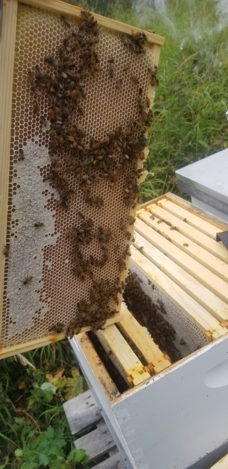 4lb Bee Package May 15th