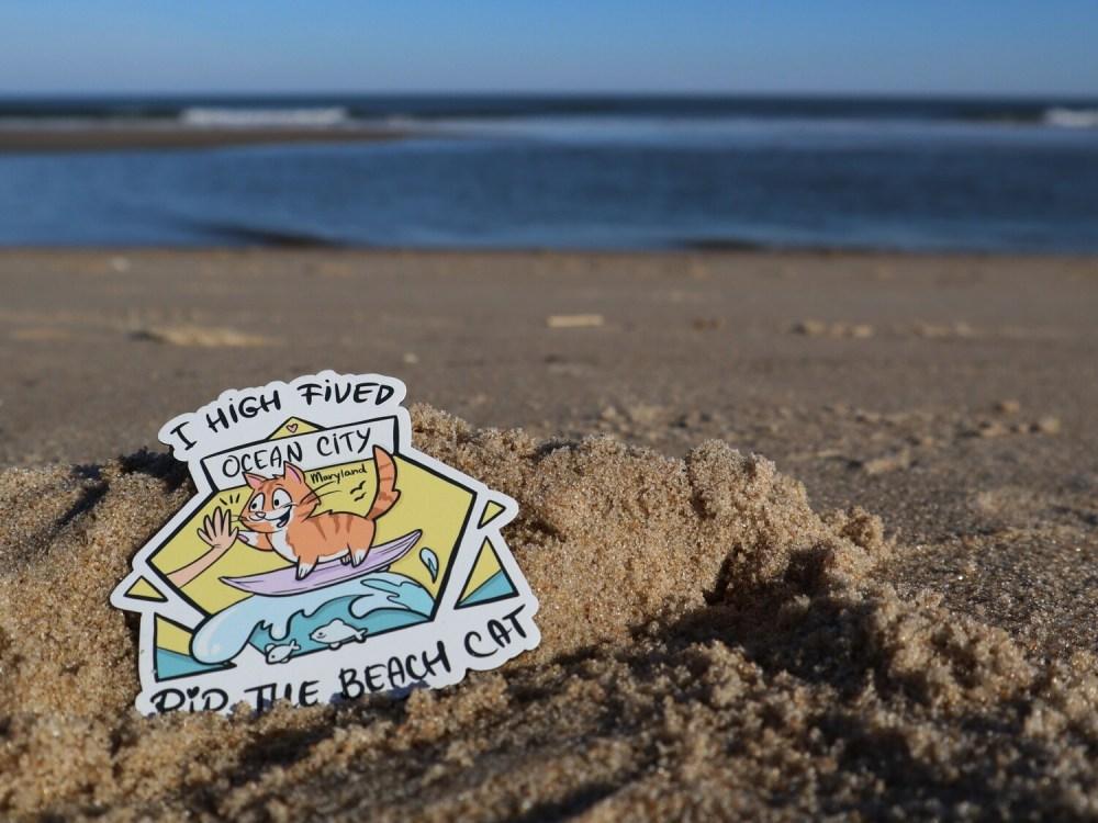I High Fived Pip the Beach Cat 3