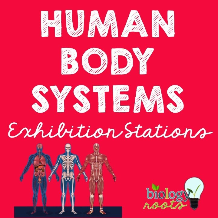 Body Systems Exhibition Stations Bundle - 11 Body Systems