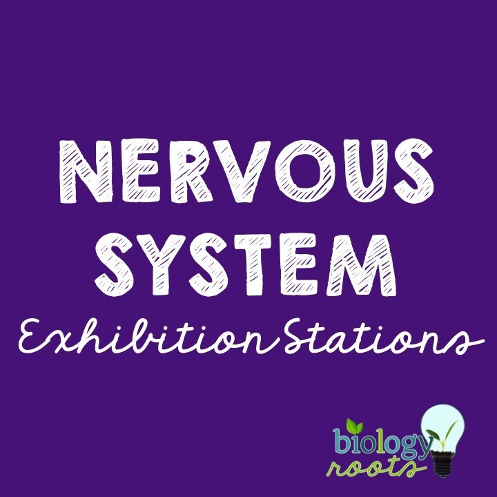 Nervous System Exhibition Stations Bundle