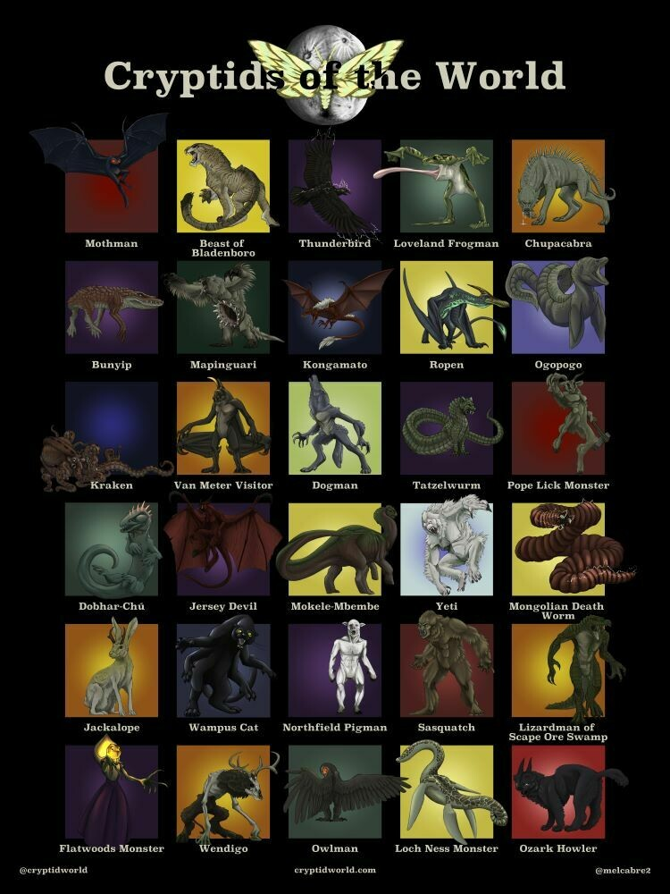 Cryptids of the World   18 x 24 Poster