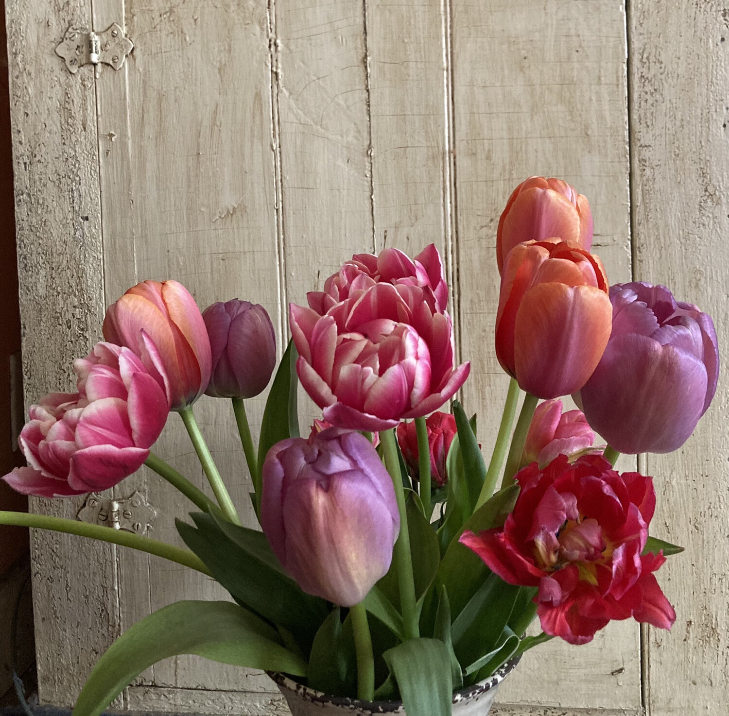 Tulip Bunches Farm Pick Up Only