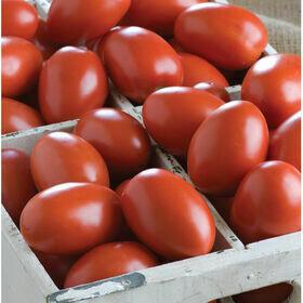 Roma Tomato Plant 4