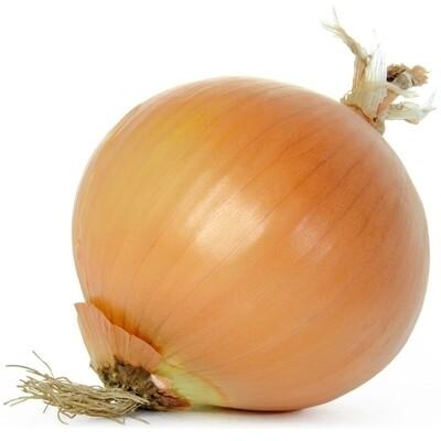 Onion - each