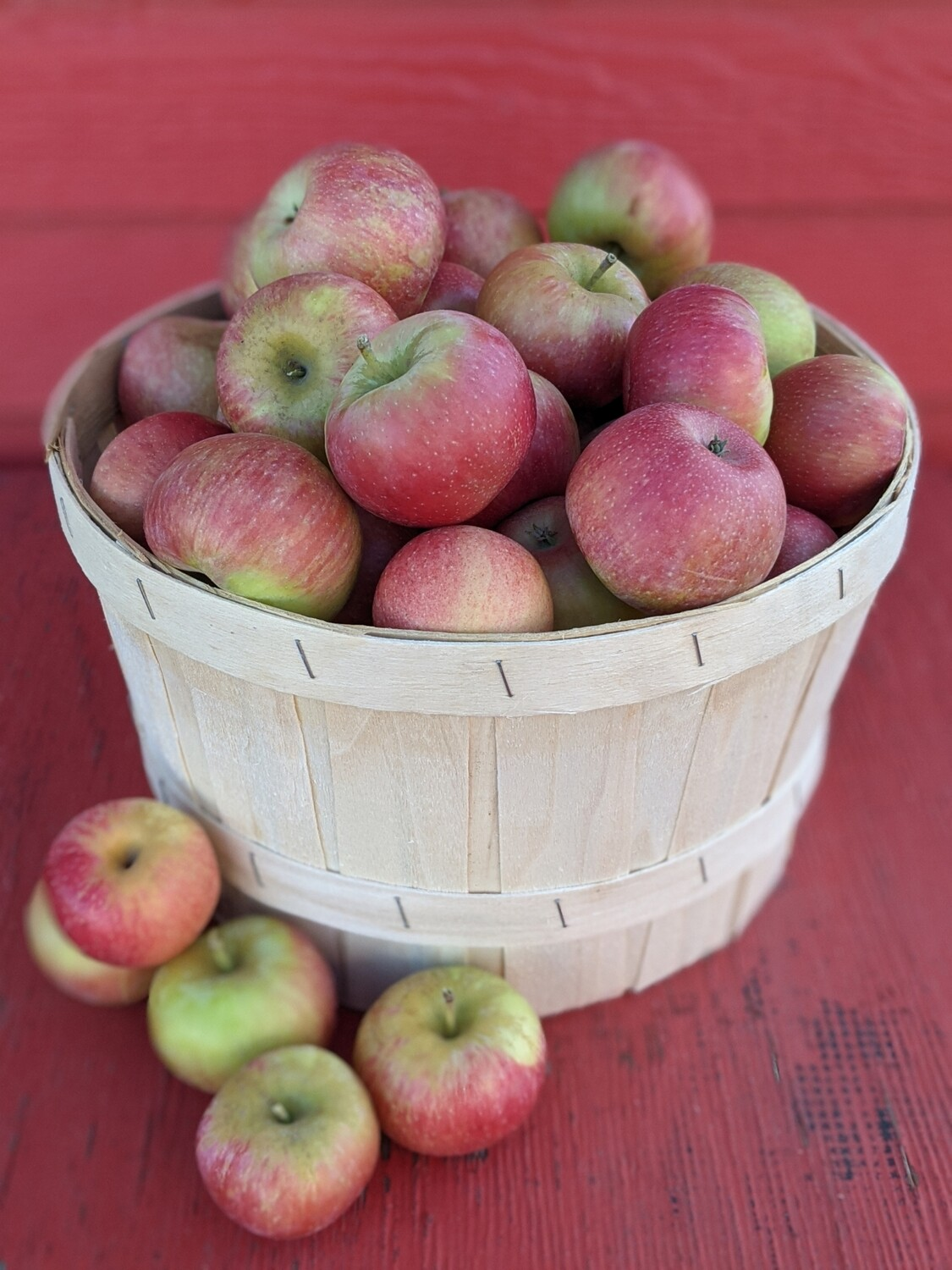 Pick-Your-Own Apples (Deluxe 1 Peck Basket) approximately 12 lbs