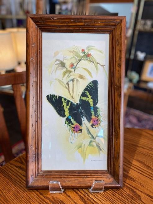 Vintage Butterfly Framed Print Signed B. Ballestar