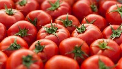 Field Tomato