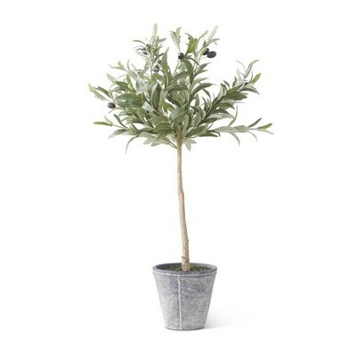 Olive Tree in Gray Wash Pot 31