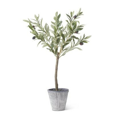 Olive Tree in Gray Wash Pot 24
