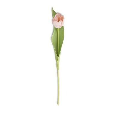 Pink Tulip 14