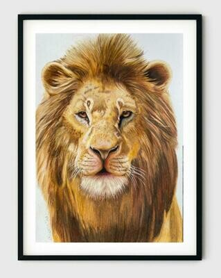 Original Lion Art- Colored Pencil Drawing