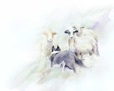 Sheepherding Watercolor Giclee Print - MABCR Exclusive