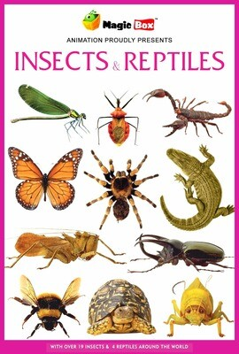Insects and Reptiles