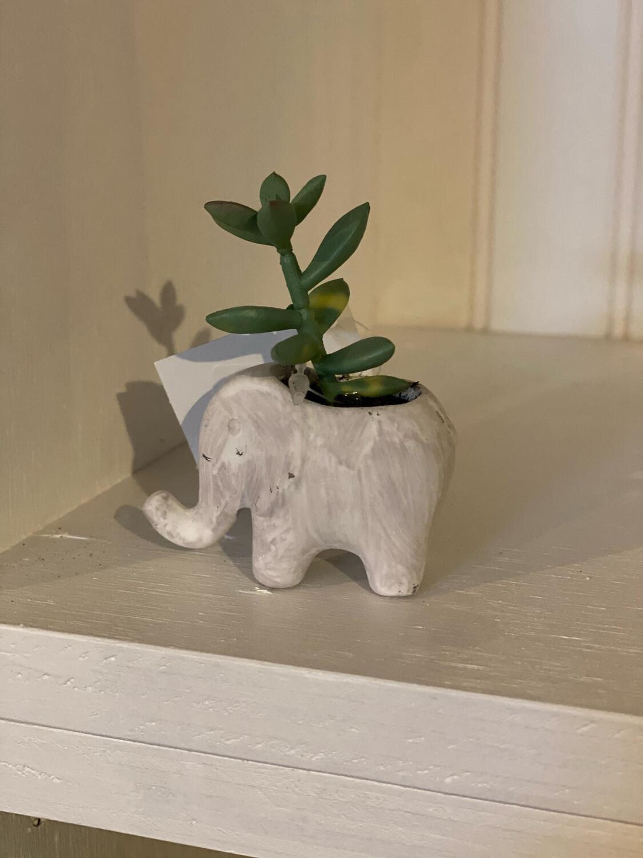 Mini Elephant Plant