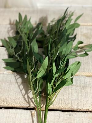 Willow Leaf Bush 20