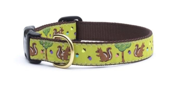 84 Squirrel Collar- Dog Sz Sm