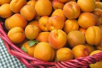 Apricot Kolsch