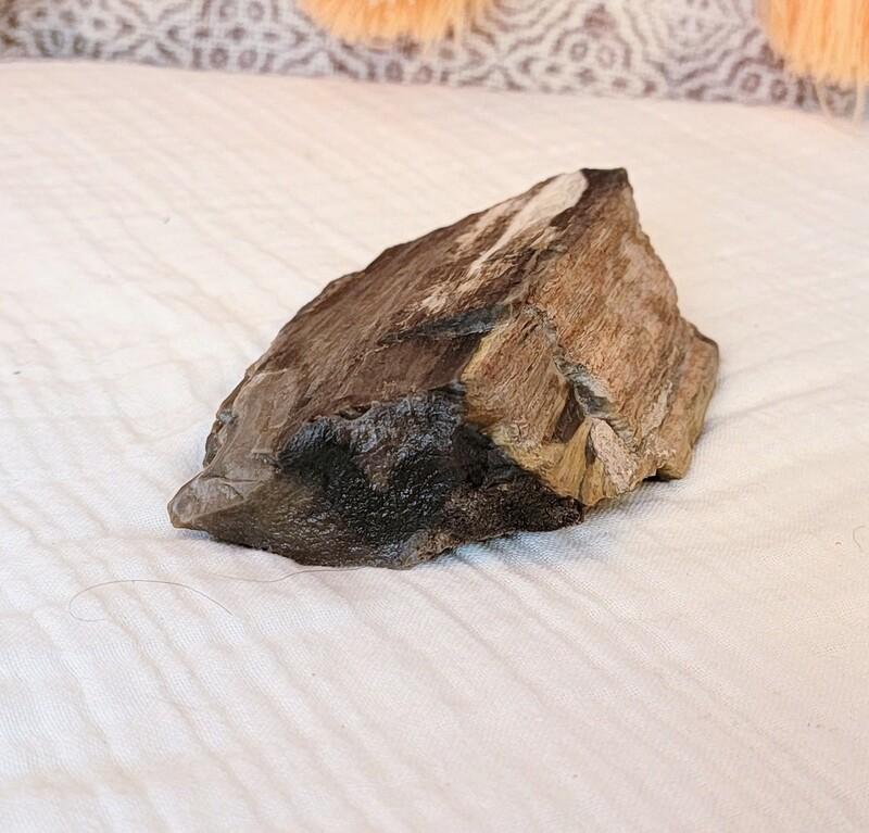 Petrified wood piece