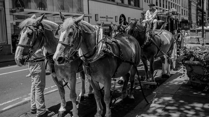 Well Fargo Stagecoach, 5th Avenue, New York! 0555