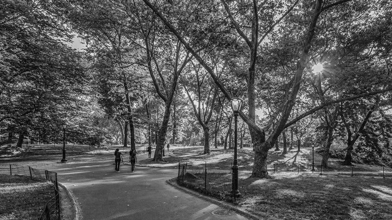 Early Morning at Central Park, New York