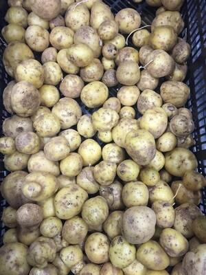 *Maple Row Farm Potatoes 1 lb - Yukon Gold