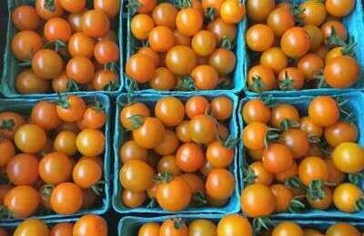 SGF Cherry Tomato Half Pint Sungold **