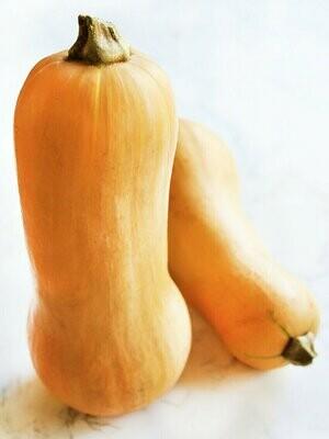 *Maple Row Butternut Squash (2-3 lbs each)