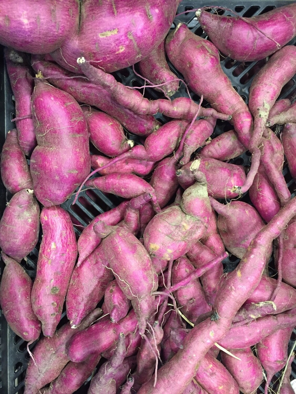 *SGF Sweet Potatoes 1 lb - Murasaki Purple