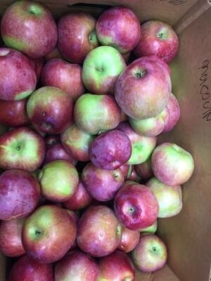 Apples $3/lb - Macoun