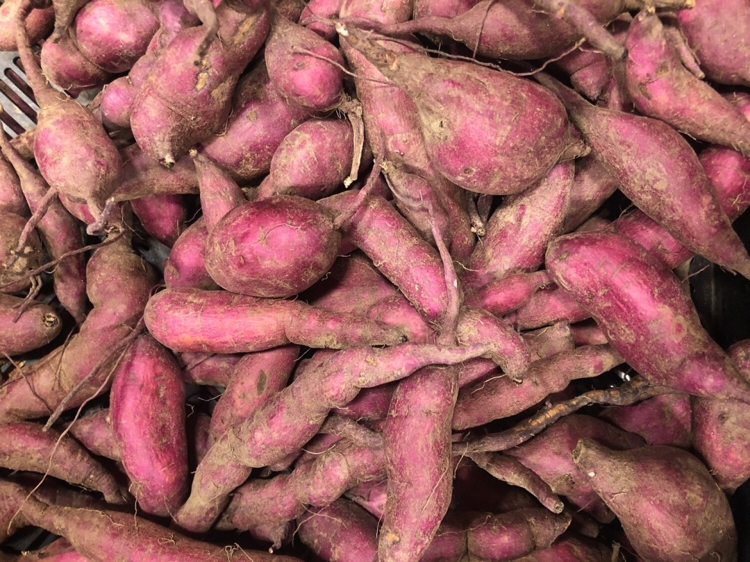 *SGF Sweet Potatoes 1 lb - Burgandy Pink