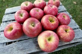 APPLES $3/lb - Evercrisp Apples